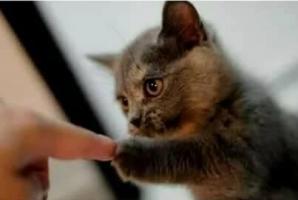 gratuit rencontres en ligne avec chat Anand rencontres